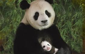 Google Panda Bear